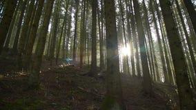 I raggi di sun in foresta