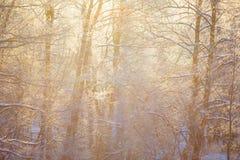 I raggi dorati del sole che scorrono con l'inverno nevoso della foresta abbelliscono fotografia stock libera da diritti