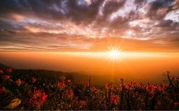 I raggi luminosi dal sole è brillanti Fotografie Stock