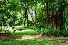 I rami con le foglie dell'albero Immagine Stock