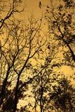 I rami degli alberi profilano il cielo arancio del tramonto della lampadina nella caduta Fotografia Stock Libera da Diritti