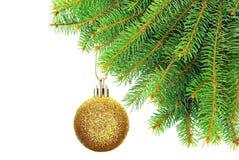 I rami del Natale si attillano su un fondo bianco. Fotografia Stock