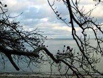 I rami dell'albero e del mare Fotografia Stock