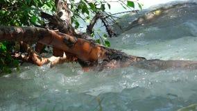 I rami della betulla sono nell'acqua archivi video