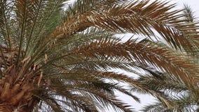 I rami della palma si chiudono su