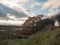 I rami delle foglie di autunno scoprono la caduta vuota dello spazio del paesaggio del paese Immagine Stock