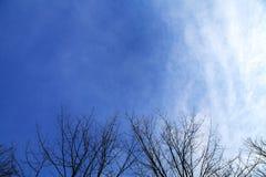 I rami di albero asciutti con il cielo si appanna il fondo Fotografie Stock Libere da Diritti