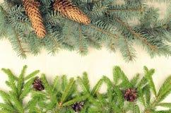 I rami di due varietà si attillano e dei coni di abete su un backg di legno Fotografie Stock