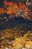 I rami di fogliame rosso appendono sopra il fiume di Farmington, Connecti fotografia stock libera da diritti