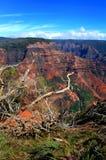 I rami incorniciano la vista del canyon di Waimea fotografia stock libera da diritti