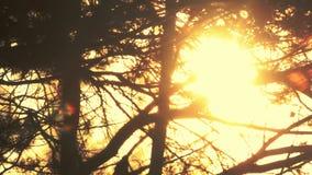 I rami profilano al tramonto Priorità bassa della natura Rami di albero della lampadina archivi video