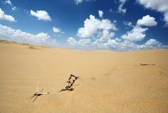I rami secchi in deserto Immagini Stock