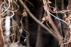 I rami si asciugano l'anno scorso & x27; erba di s con le foglie appassite fotografie stock