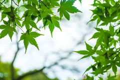 I rami sull'autunno fotografie stock libere da diritti