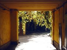 I rami verdi dell'edera pendono dall'altro lato dell'arco della costruzione immagine stock