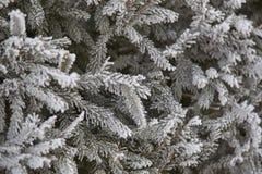 I rami verdi si attillano Neve lanuginosa bianca primo piano orizzontale Fotografia Stock Libera da Diritti
