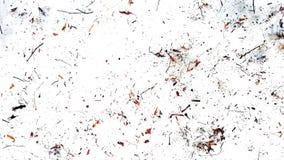 I ramoscelli ed asciugano le foglie sui precedenti bianchi Estratto immagine stock