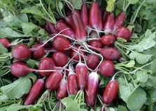 I ravanelli rossi dell'alimento della radice del ravanello di giardino di bianco della natura della foglia del primo piano di die Immagini Stock