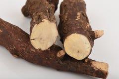 I reidioides Kurz Craib di Trigonostemon, le proprietà della radice è bollito con acqua Tubercolosi ed altra aiuto immagine stock libera da diritti