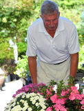 I Am Relaxed. A handsome senior man with nice tan is pleased with the available selection at the garden center.  He finds peace and comfort in this serene Royalty Free Stock Image