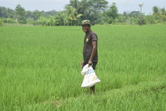 I residenti hanno sovvenzionato l'uso del fertilizzante da BULOG Fotografie Stock Libere da Diritti