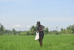 I residenti hanno sovvenzionato l'uso del fertilizzante da BULOG Fotografia Stock Libera da Diritti