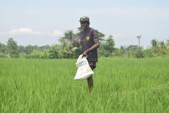 I residenti hanno sovvenzionato l'uso del fertilizzante da BULOG Fotografie Stock