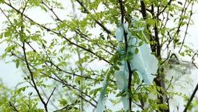 I resti dei sacchetti di plastica lacerati si appoggiano il ramo di albero video d archivio