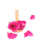 i Rosa-petali e sono aumentato Fotografie Stock Libere da Diritti