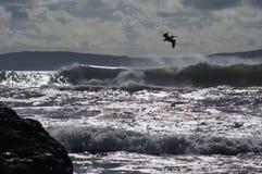 I rulli dell'oceano di Ensenada Messico ondeggia l'isola delle montagne delle nuvole del pellicano Fotografia Stock Libera da Diritti
