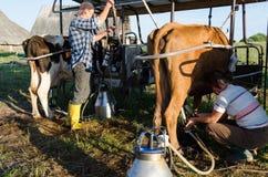 I ryots degli agricoltori coppia gli animali della mucca di mungitura in azienda agricola Fotografia Stock