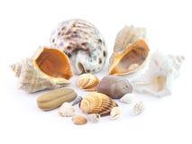 I seashells Immagini Stock