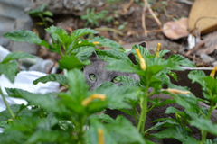 I see you the green eyes are watching Royalty Free Stock Photography