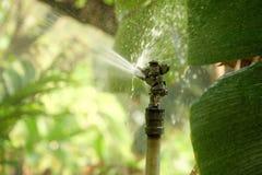 I selektiv fokus av bevattningsprinkleranläggningen med fuktighetsvatten över grönt trädgård- och solljus arkivfoton