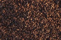 I semi del cacao dell'essiccazione con sole nel kidul del gunung, Jogjakarta, Indonesia Fotografia Stock Libera da Diritti