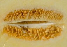 I semi del melone si chiudono su Fotografia Stock Libera da Diritti