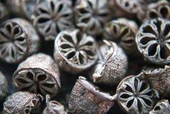 I semi dell'albero del tè si chiudono su Fotografia Stock