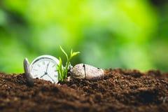 I semi di piantatura di seme della crescita di tempo proteggono il sapota dell'alberello fotografia stock libera da diritti