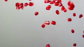 I semi maturi rossi del granato volano su un fondo bianco archivi video
