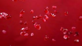 I semi maturi rossi del granato volano su un fondo rosso video d archivio