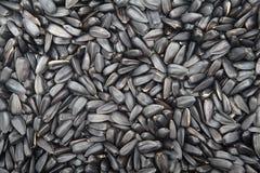 I semi neri del girasole hanno arrostito il fondo Immagine Stock