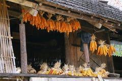 I semi secchi è appeso sul tetto della casa della minoranza etnica Immagine Stock