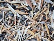 I semi verde oliva ed asciugano le foglie Immagine Stock