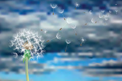 I semi volano illustrazione di stock