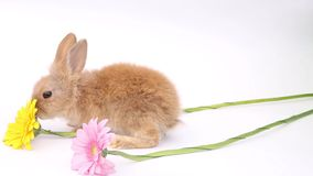 Rabbits on a white background, cute rabbits on a white background, rabbit stock video footage