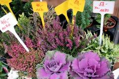 I shoppa med blommor Royaltyfria Bilder