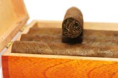 I sigari sono in una casella. fotografia stock libera da diritti