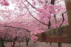 I sikt Taiwan för körsbärsröda blomningar Arkivbilder
