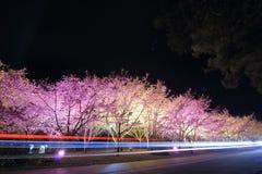 I sikt Taiwan för körsbärsröda blomningar Fotografering för Bildbyråer