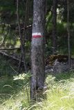 I simboli e firma dentro i sentieri nel bosco immagine stock